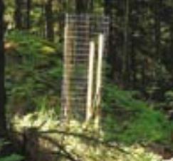 indywidualna ochrona drzewek
